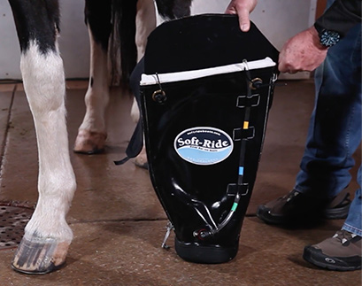 Vibration In Foot >> Horse Hoof Boots and Gel Insert Orthotics for Horses ...